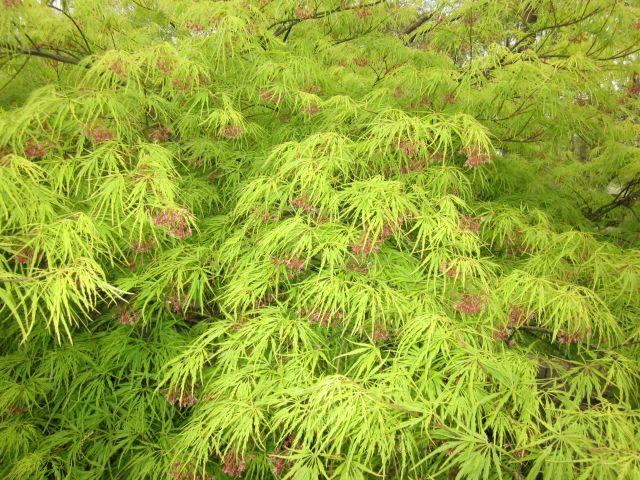 rain forest bush