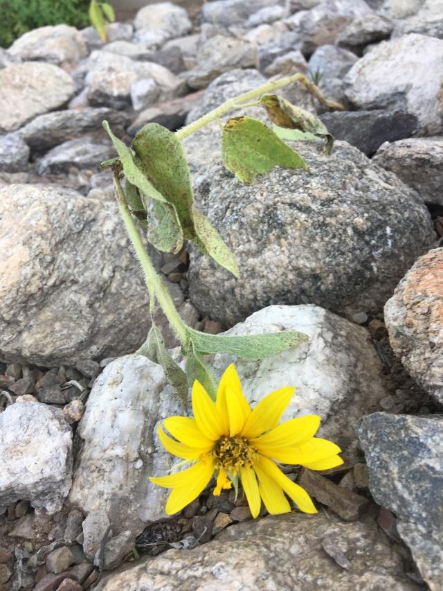 broken but blooming